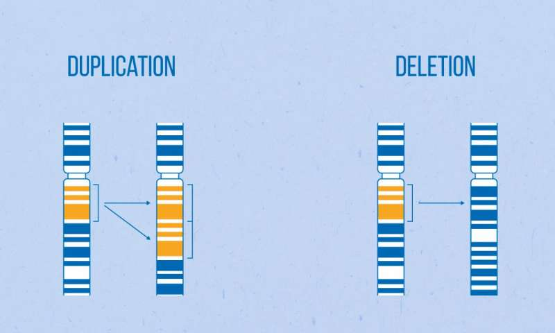 Chromosome rearrangements deletions and duplications -- mean that the number of copies of different genes varies and can be unique to each person. Credit: MIPT's Press Office